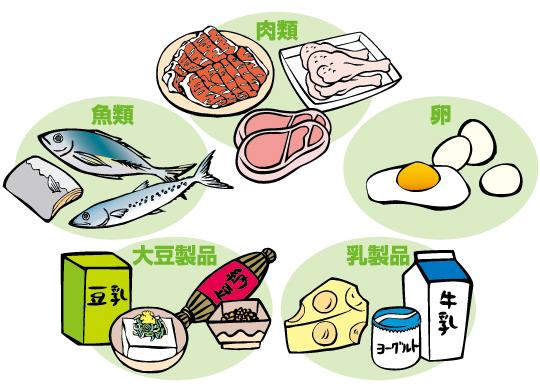 「タンパク質が含まれる食品」の画像検索結果